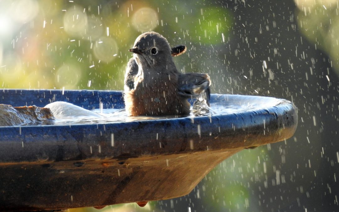 How Do Birds Cope With Hot Weather?