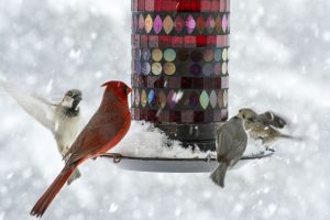 Cardinal, finch, and sparrows at a bird feeder during snow storm