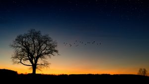 Silhouette of birds and tree against night sky